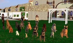 Virtual Kennel Club