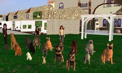 Virtual Kennel Club