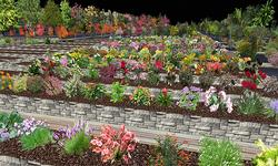 MEP Martie's Elegant Plants
