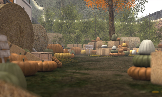 The Pumpkin Patch at Fancy Decor