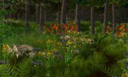 Dawson Forest