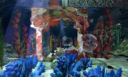Mermaid Home Rentals