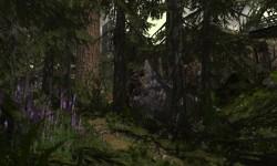 The GlastonBelli Redwood Forest